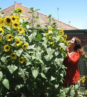 Woman standing next to and smelling a giant flowering bush