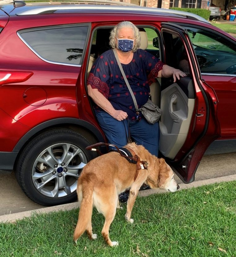 woman getting out of rideshare car, wearing mask, and with a guide dog