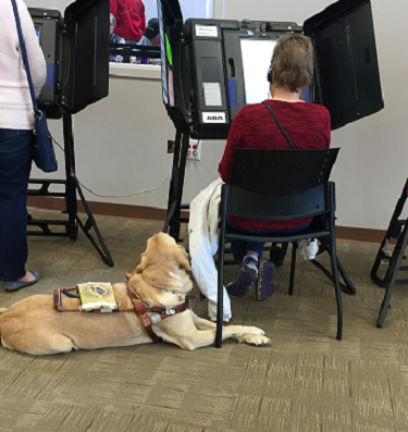 woman voting using accessible voting machine her guide dog at her feet