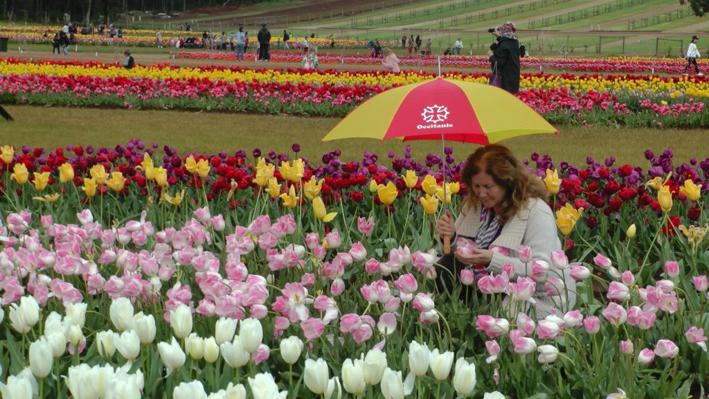 Maribel with white, red, yellow and pink tulips