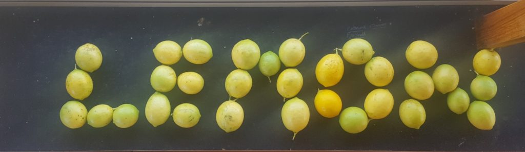 """sign spelling out the word """"lemons"""" -using real lemons to form the letters. Photo by Harry Williamson"""